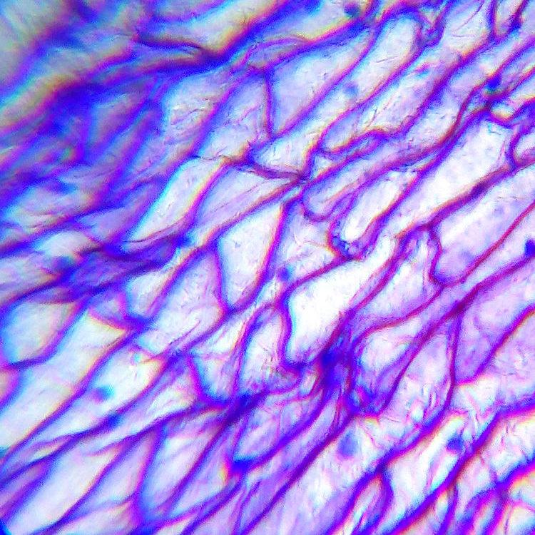 Фотографии объектов в микроскоп Levenhuk LabZZ M101 Lime