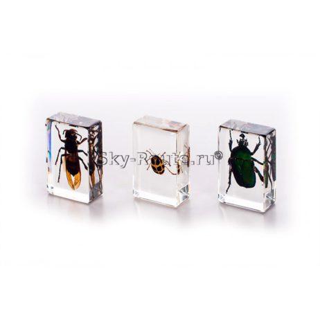 Микроскоп Velvi Первоклашка 3D (с набором насекомых)