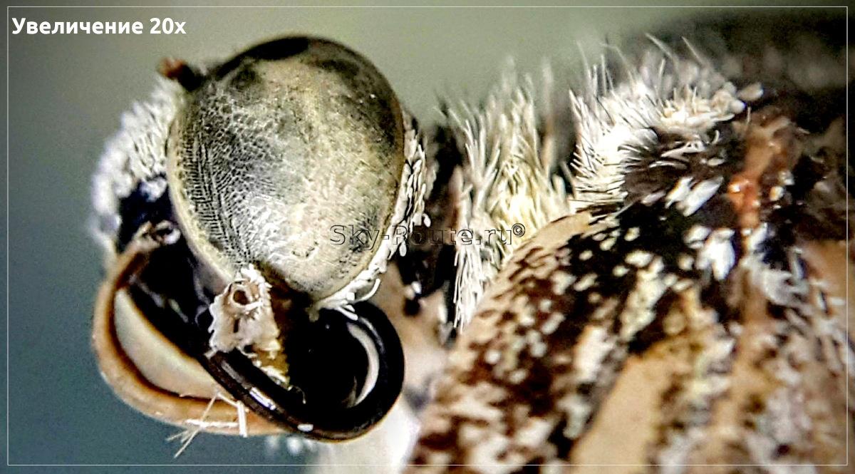 Что можно увидеть в микроскоп