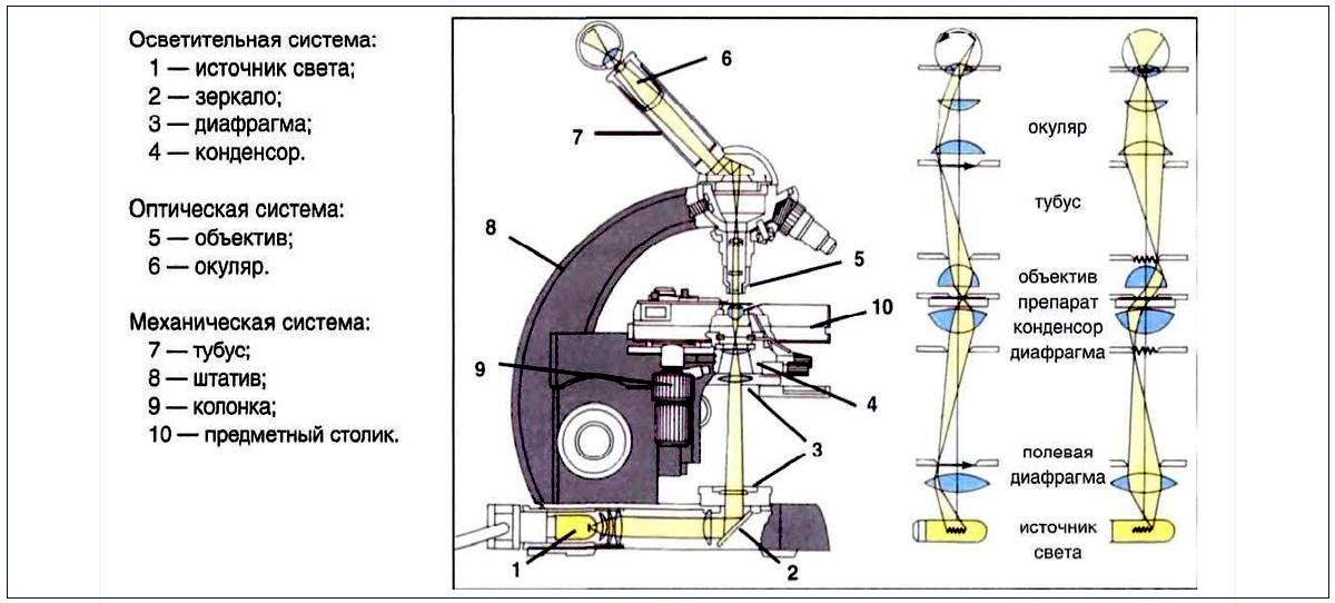 Что можно увидеть в микроскоп?
