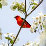 Как выбрать бинокль для птиц