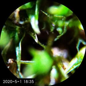 Обзор Микромед С-11 вар. 1B LED